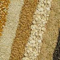 Grain Manufacturers