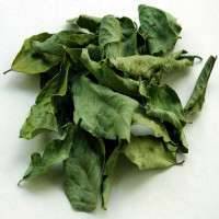 Curry Leaves Manufacturers