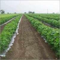 Soil Solarization Film Manufacturers