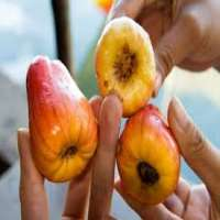 Cashew Apples Manufacturers