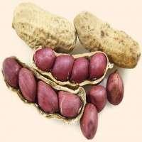 Ground Nut Manufacturers