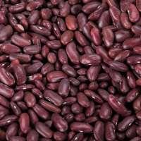 Dark Kidney Bean Manufacturers