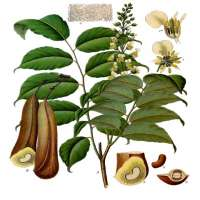 Balsam Oil Manufacturers