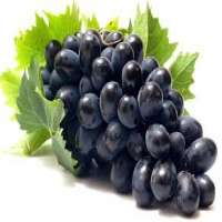 Black Grapes Manufacturers