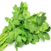Coriander Leaves Manufacturers