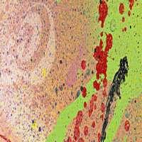 Nova Spray Paints Manufacturers