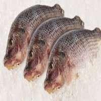 Frozen Sea Foods Manufacturers