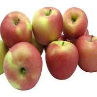 Fuji Apple Manufacturers