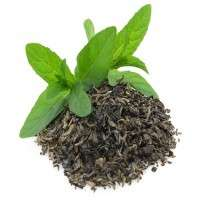 Natural Green Tea Manufacturers