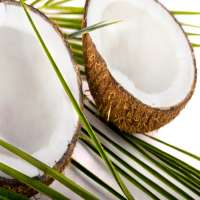 椰子醋 制造商