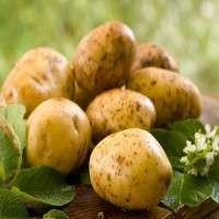 Fresh Potatoes Manufacturers