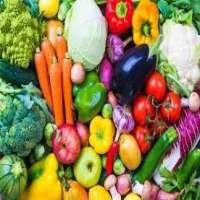 有机蔬菜 制造商