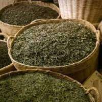 Green Tea Premix Manufacturers