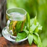 Mint Tea Manufacturers