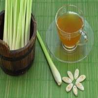 Lemongrass Tea Manufacturers