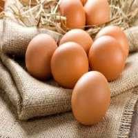 有机鸡蛋 制造商