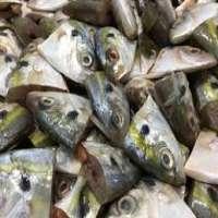 Fish Waste Manufacturers