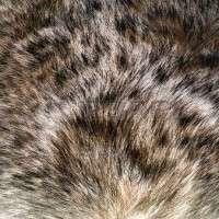 动物的头发 制造商