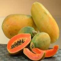 新鲜的木瓜 制造商
