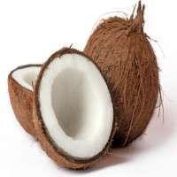 半熟的椰子 制造商