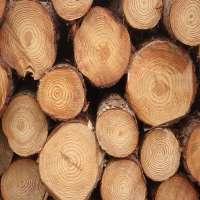 Pine Log Manufacturers