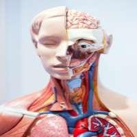解剖模型 制造商