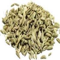 Fennel Seed Manufacturers