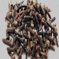 Clove Seeds Manufacturers