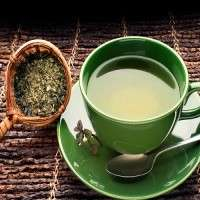 Green Tea Manufacturers