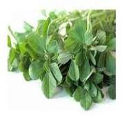 Fenugreek Leaf Manufacturers