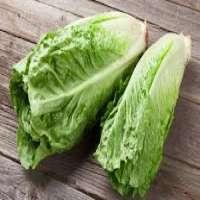 Romaine Lettuce Manufacturers