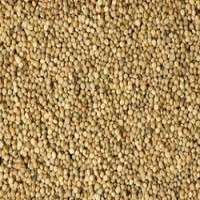 Cluster Bean Seed Manufacturers