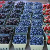 Frozen Berries Manufacturers