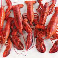 Lobster Manufacturers