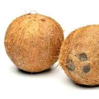 成熟的椰子 制造商