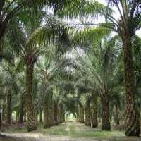 Palm Oil Plant Manufacturers
