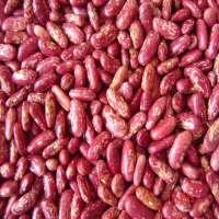 红色斑点的芸豆 制造商
