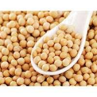 有机大豆种子 制造商
