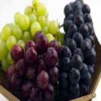 表葡萄 制造商