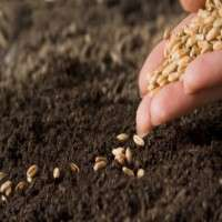 Organic Seed Manufacturers