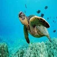 Aquatic Animals Manufacturers