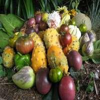 亚热带水果 制造商
