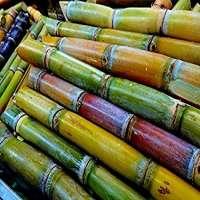 甘蔗 制造商