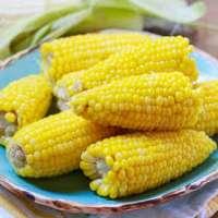 玉米棒子 制造商